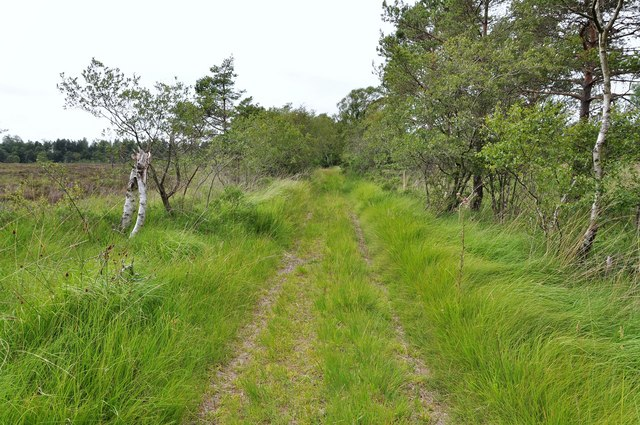 White Moss track