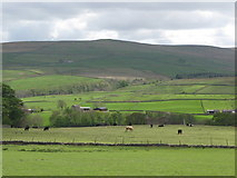 NY9038 : Pastures below Low Crooked Well (3) by Mike Quinn
