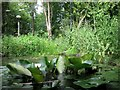 SP9314 : Water Lilies, Window in the Woods, College Lake by Chris Reynolds
