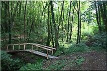SX5350 : Woodland Footbridge by Tony Atkin