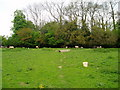 SO7978 : Path through field of sheep by Peter Holmes