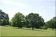 TG1908 : Two trees, Earlham Park by N Chadwick