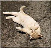 SX7962 : Cat, Dartington by Derek Harper