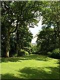 SX7962 : The Glade, Dartington Hall Gardens by Derek Harper