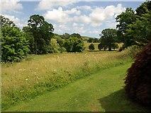 SX7962 : Valley Field, Dartington Hall Gardens by Derek Harper