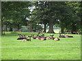 NZ1221 : Deer park at Raby Castle by Carol Walker