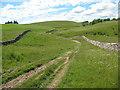 NY7205 : Drove road towards Newbiggin by Stephen Craven