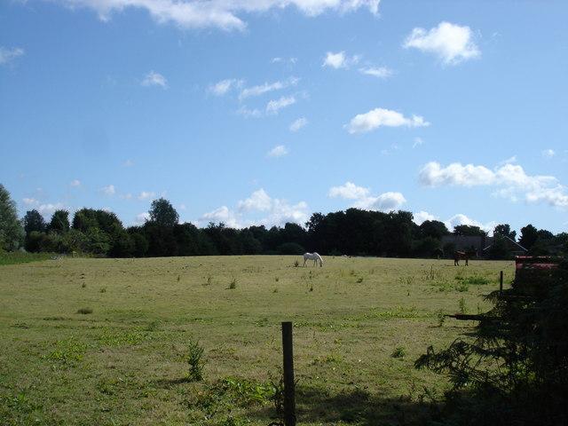 Field off Common Lane