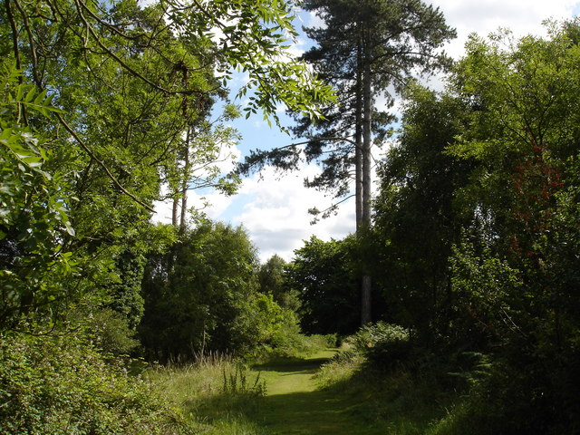 Track in Rendelsham Forest