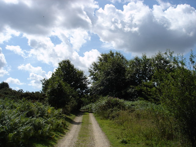 Byway in Rendlesham Forest