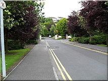 J1953 : Avenue leading to Skeagh House by Dean Molyneaux