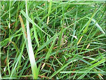 NT1512 : Not just a few bits of grass... by M J Richardson