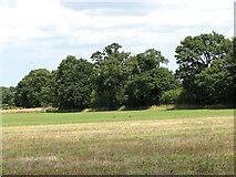 TG3502 : Hay field adjoining farm track by Evelyn Simak