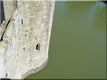 TQ7825 : The Moat at Bodiam Castle by PAUL FARMER