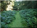 SP9634 : Fern edged path by Barry Ephgrave