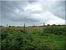 SX7379 : Dartmoor National Park : Sheep & Moorland by Lewis Clarke