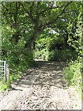 SM9911 : Bridleway At East Hook Farm by Peter Whatley
