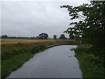SE5726 : Selby Canal, West Haddlesey by Glyn Drury