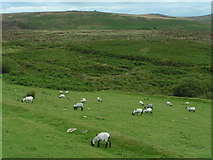 SX6781 : Sheep on the moor near the Warren House Inn by Rob Purvis