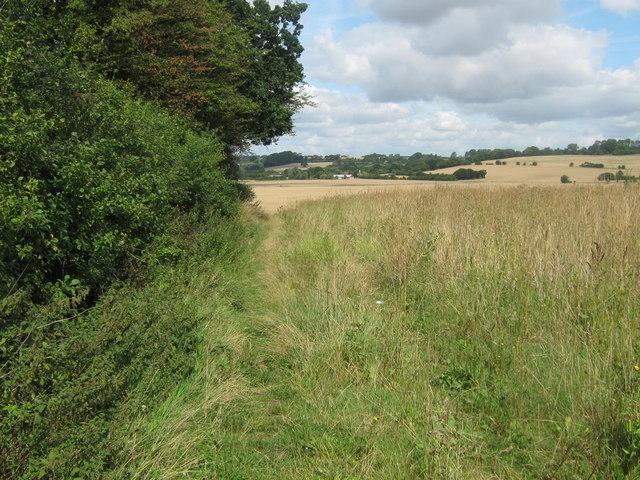 Footpath beside hedge to Honey Farm