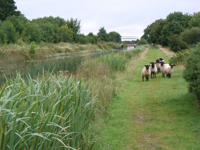Royal Canal South of Longwood, Co. Meath