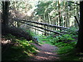 SD2391 : Fallen trees on the path to Lind End by David Brown