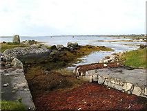 L9230 : Slipway and seaweed by Jonathan Wilkins
