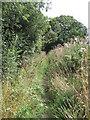 SJ4072 : View of Bridleway by David Quinn