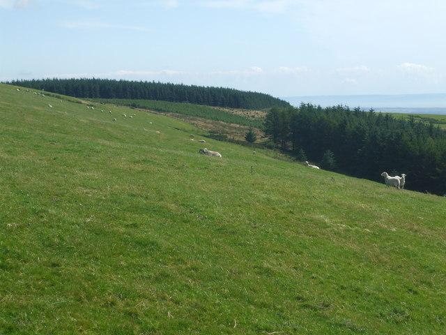 Sheep grazing on mountain side