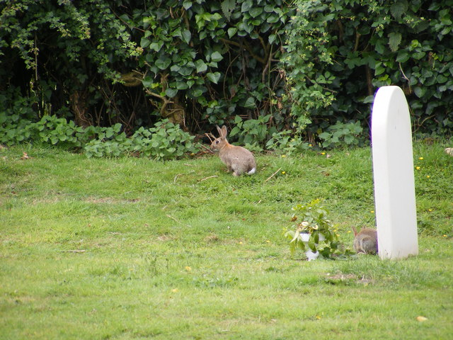 Rabbits in the churchyard of St Mary Magdalene Church