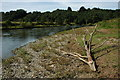 SO5621 : Driftwood on the banks of the Wye by Philip Halling
