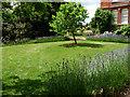 TQ3835 : The Lavender Lawn, Standen by Chris Gunns