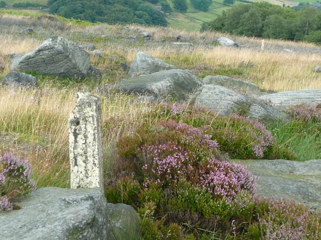 Old fence posts, Higher House Moor, Mytholmroyd
