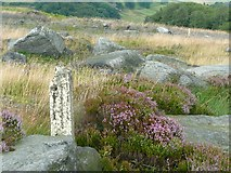 SD9922 : Old fence posts, Higher House Moor, Mytholmroyd by Humphrey Bolton