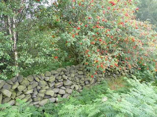 Wall around Hove Yard Wood, Mytholmroyd
