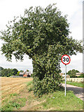 TL4311 : Wild apple tree  at Eastwick by Stephen Craven