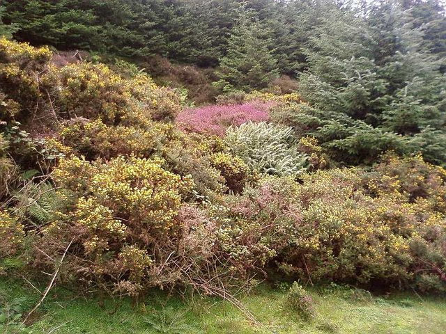Colourful undergrowth in the forest