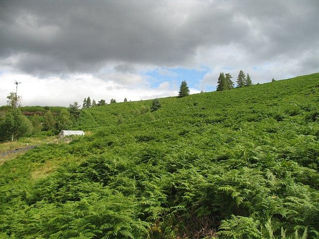 Bracken choked hillside