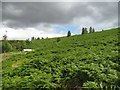 NO0051 : Bracken choked hillside by Richard Webb