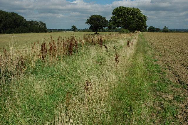 Field boundary, south of Moreton-in-Marsh
