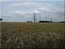 SE9532 : Radio masts over a sea of cereal by David Brown
