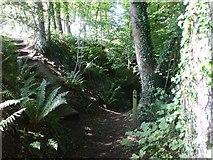 SN5981 : Footpath near Penglais Hill,  Aberystwyth by John Lord