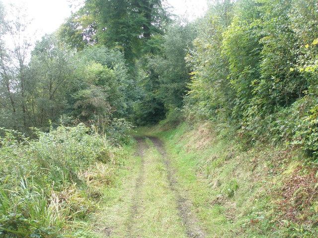 Forest Track near Finlane
