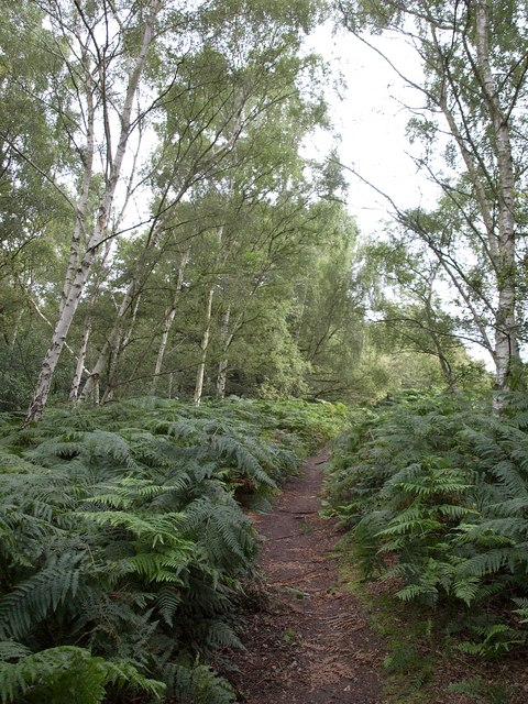 Path on Wimbledon Common