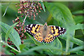 SK1854 : Painted Lady - Parwich by Mick Lobb