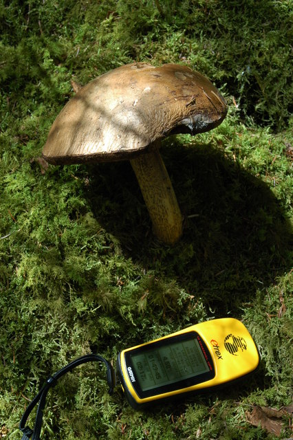 Fungus in the Dyfi Forest