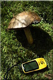 SH8010 : Fungus in the Dyfi Forest by Philip Halling