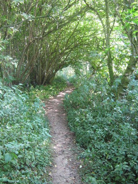 Footpath through Running Water Plantation