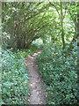 TR0245 : Footpath through Running Water Plantation by David Anstiss