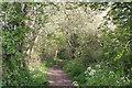 SP7800 : Footpath below Lodge Hill by Tim S Addison